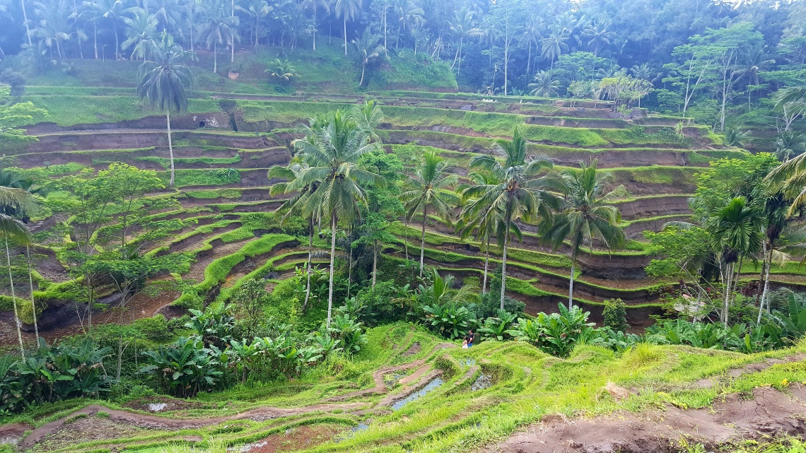 Lisa Carolan, travel, blogger, bali, rice terraces