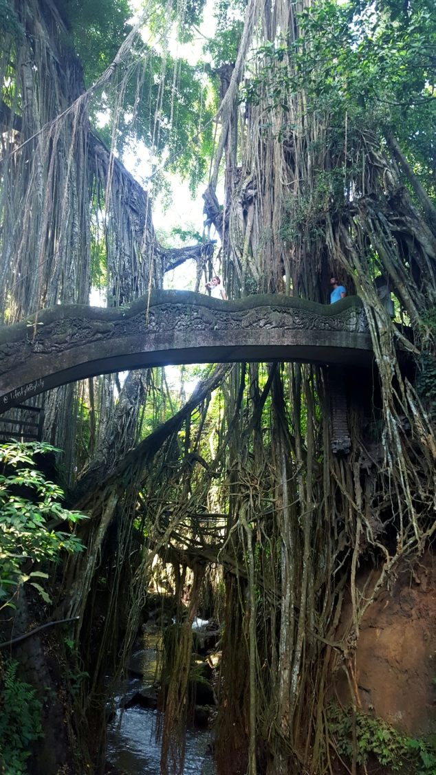 lisa, carolan, ubud, bali, travel, blogger, perth, melbourne, monkey temple