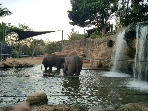 lifestyle by lily, food blogger, sydney, roar and snore, Taronga Zoo, breakfast, melbourne food blogger